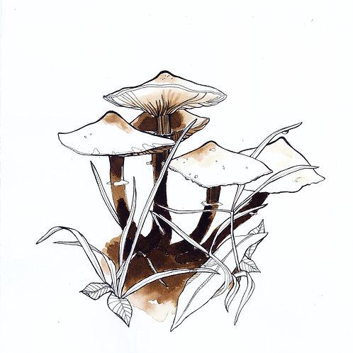 Honey mushrooms print