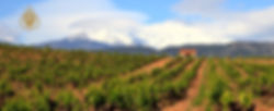 Paysage dans le Roussillon