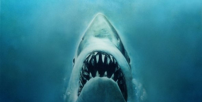Shark Attacks And Torah Scrolls