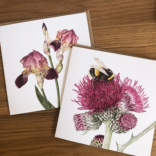 Bumble Bee and Iris Card Pack