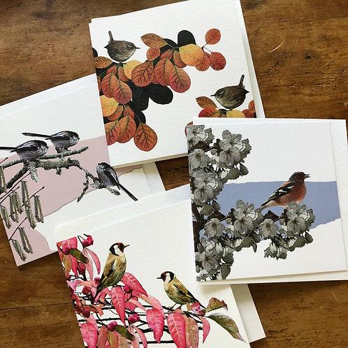 Garden Bird Card Pack