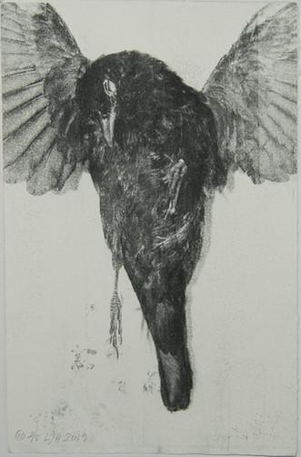 blackbird VII web.jpg