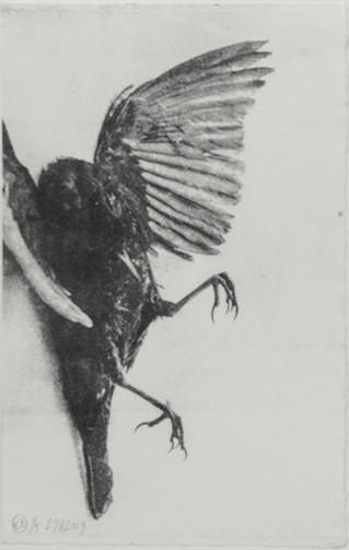 blackbird I web.JPG