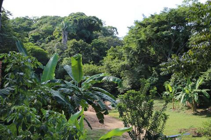 jungle look of common land.jpg