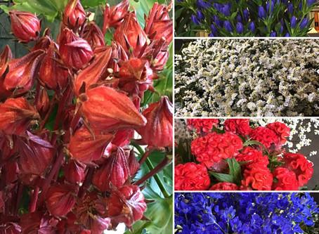 本日入荷のお花たち