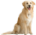 8-dog-png-image-picture-download-dogs.pn