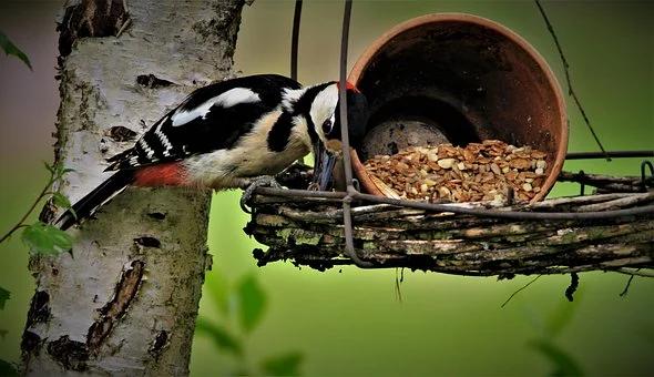 Calendrier de l'avent : 11 décembre - couronne, guirlande, boules de noël pour...les oiseaux!