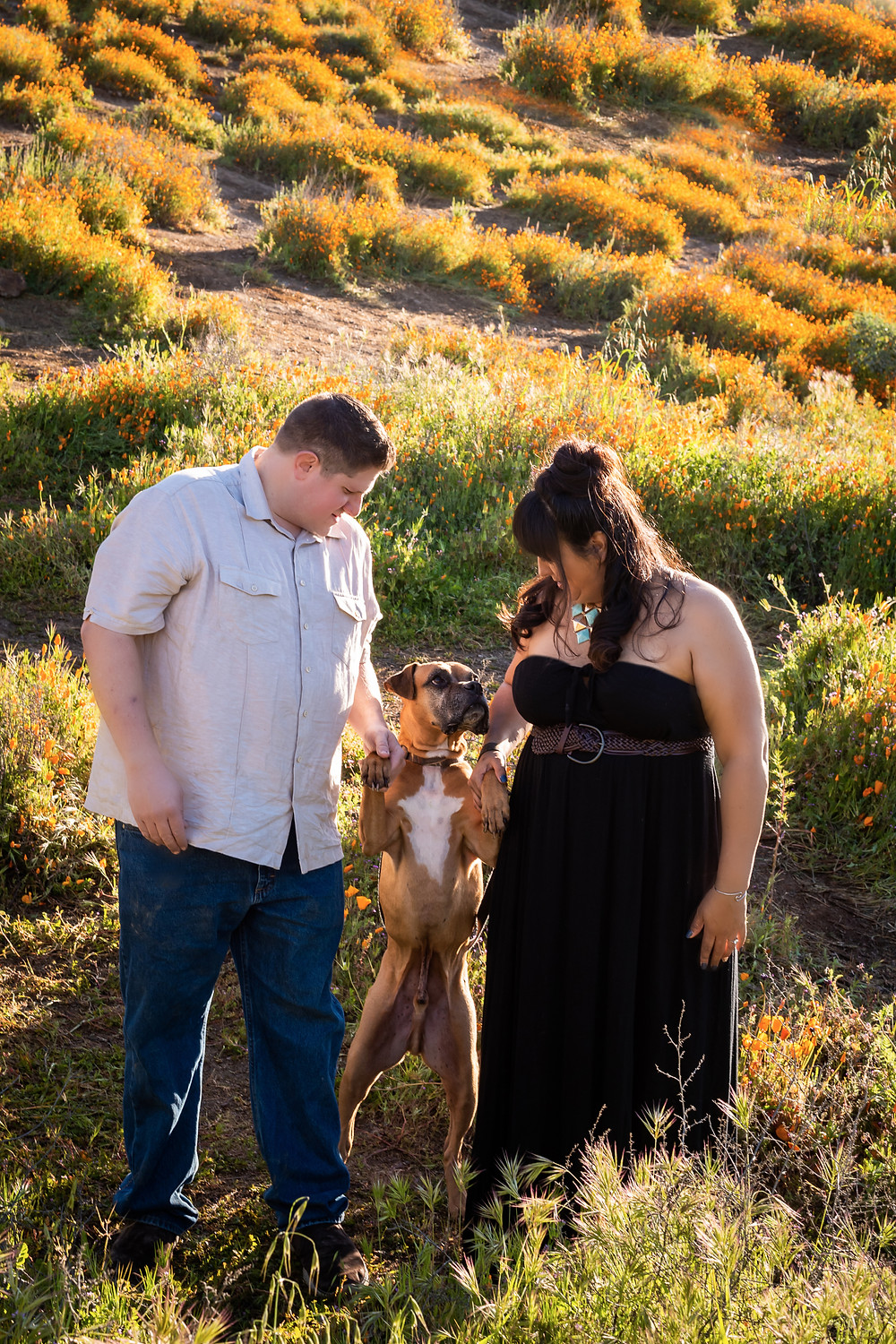 Engagement Phot With Boxer Dog