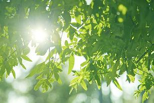 nature-973284のコピー_edited.jpg