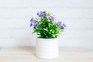 flower-3359072_1920_1.jpg