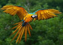 Birds of the Rainforest