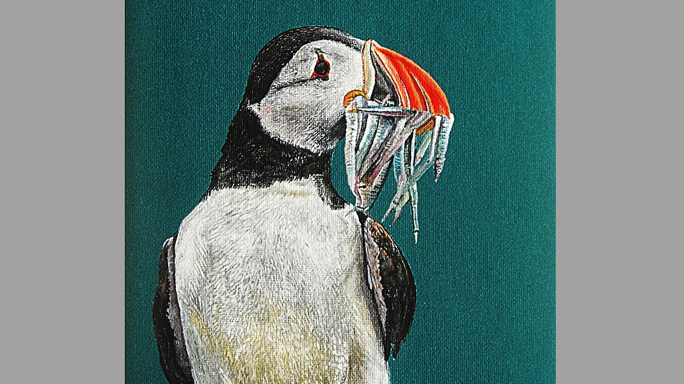 PUFFIN Artist Mark Taylor Hutchinson Original Acrylic Photo realism