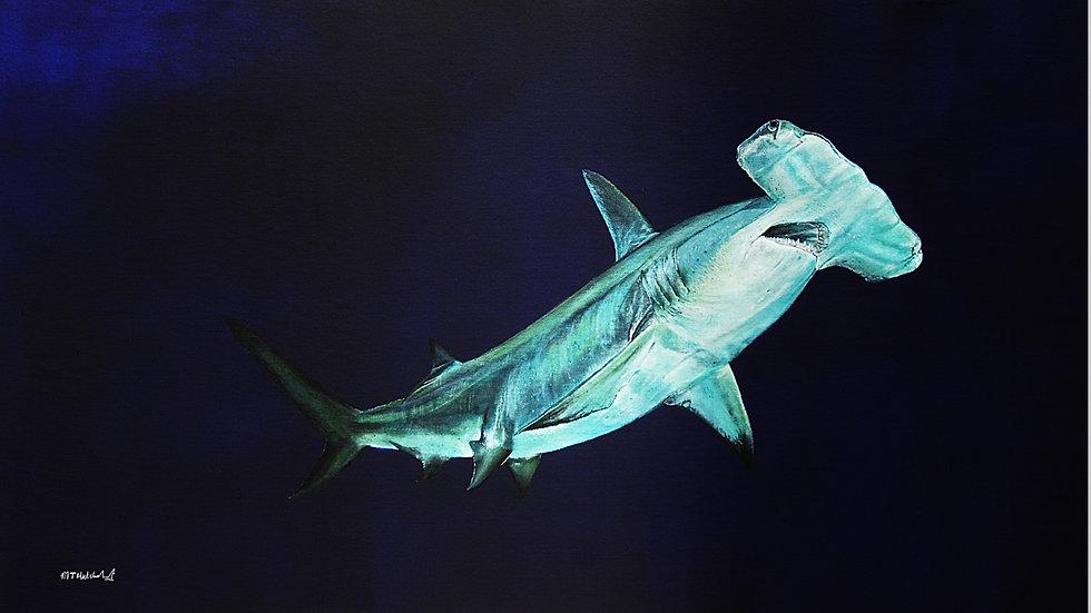 HAMMERHEAD SHARK Artist Mark Taylor Hutchinson