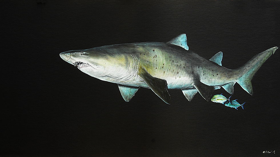 RAGGED TOOTH SHARK Artist Mark Taylor Hutchinson
