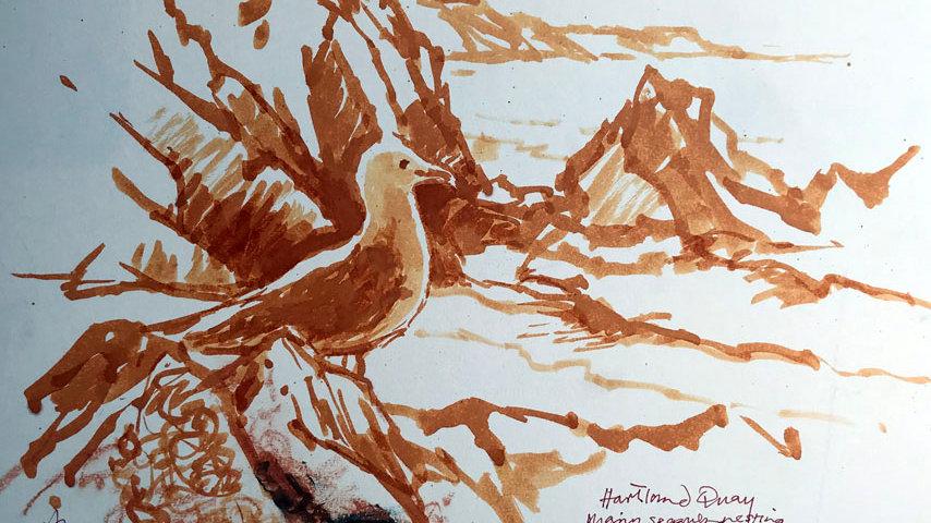 Lone Seagull on the Rocks at Hartland, Devon