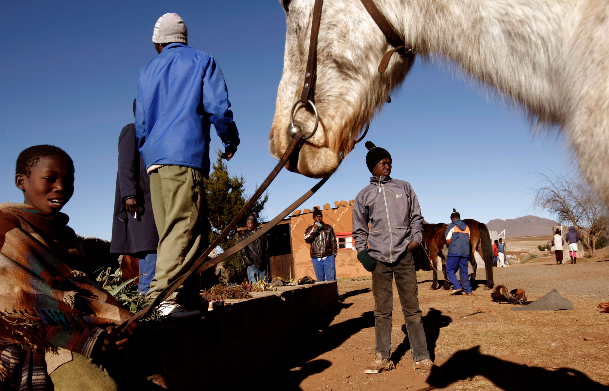 Horsemen and cattle herders tend to their horses at a trading store in Malealea, Lesotho on 11 July 2008. The Lesotho pony is an integral part of life for the Lesotho people as the ponies have been used for centuries to navigate the mountainous country.  The ponies are used by cattle herders to herd cattle and sheep as well as being used to transport goods.  They are also the wealth of a family or horseman and where brought to Southern Africa during the 18th century from the east by the Dutch settlers.