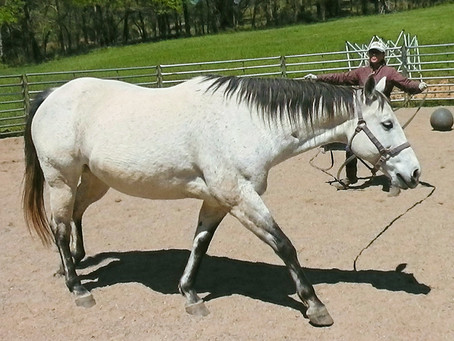 What is Equine Rehabilitation?