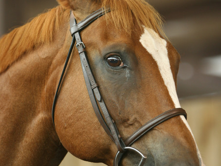 How Hard Should You Pull on the Reins?