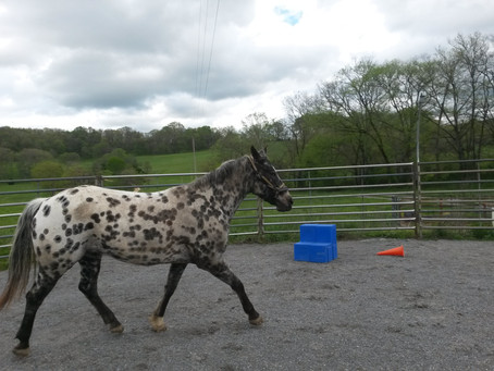 Case Study - The Horse Who Wouldn't Tie
