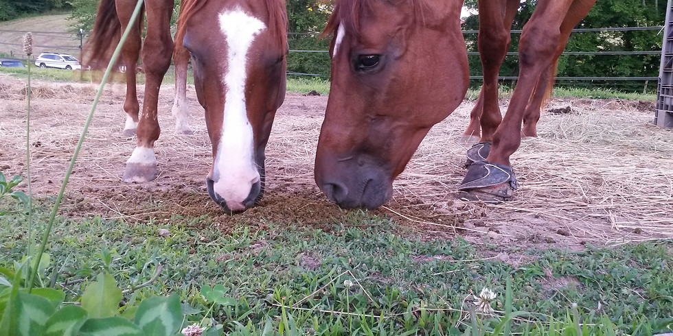 Introduction to Equine Nutrition - Part 2 in Our Online Equine Wellness Series