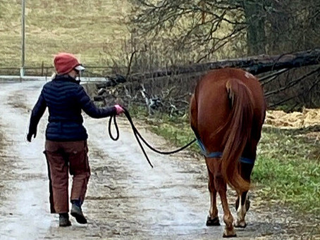 Equine Rehabilitation Has Its Ups and Downs