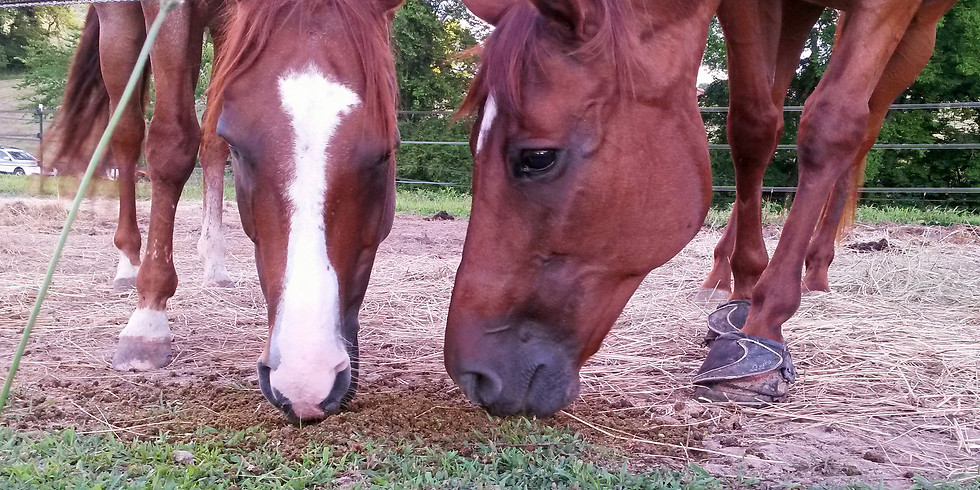 Introduction to Equine Nutrition