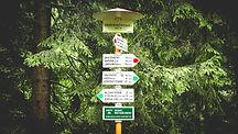 street%20signs%20near%20green%20tree_edi