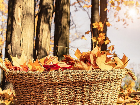 Official Fall Family Bucket List of 2019