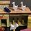 Thumbnail: Vintage handmade wooden farm animals & building
