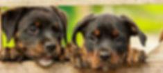 Aux4pat bien-être massage canin nimes occitanie