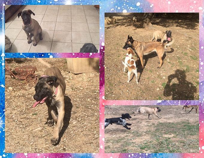 Pension canine aux4pat nimes occitanie