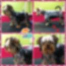 Aux4pat toilettage chiens et chats Nîmes Occitanie