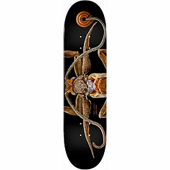 Powell Peralta Biss Marion Moth