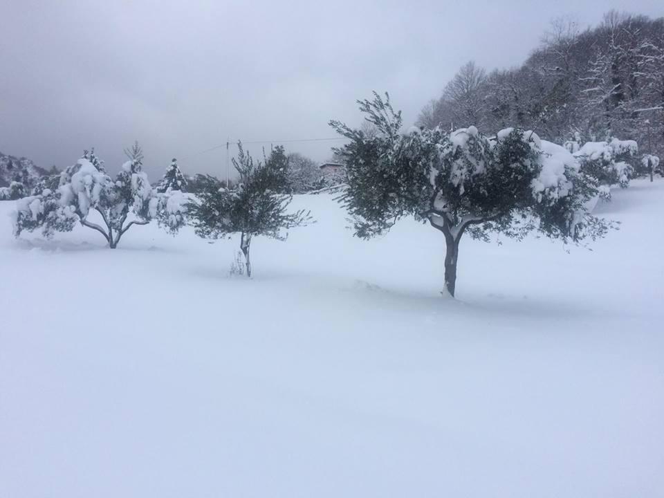 Olivenbäume im Winter