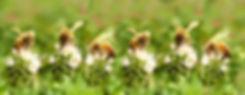 bees-4971985_1920.jpg