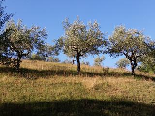 Gutes und schlechtes Olivenöl
