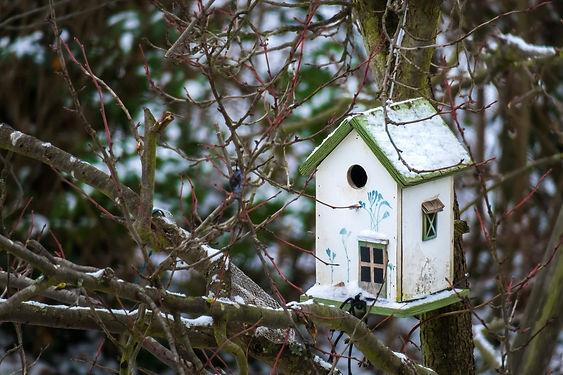 bird-feeder-3878421_1920.jpg