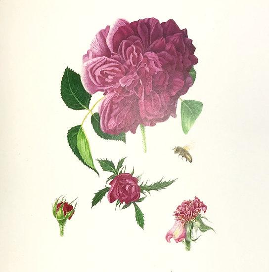 Narelle Thomas Greeting Card - Rose