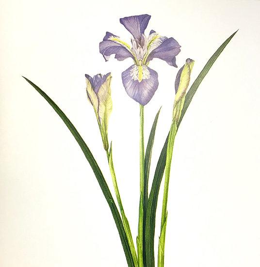 Narelle Thomas Greeting Card - Iris