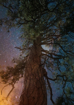 Magical Acorn Tree