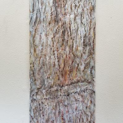 Cypress Rubbing #9