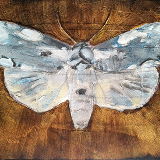Dogwood Moth