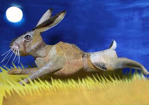 Sprinting Hare
