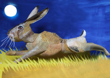 Sprinting Hare