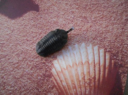 Fossilized trilobite pendant