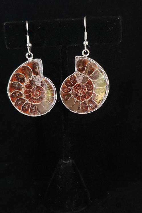 Fossilized ammonite earrings