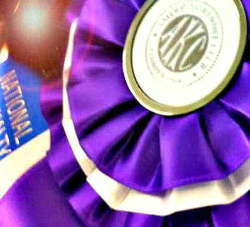 Reserve-Winner-Ribbon1.jpg