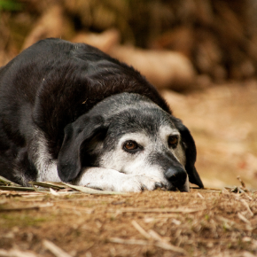 Catherine Corden-Parry recommends 5 things to look out for in older dogs