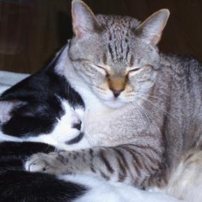 Get Northlands Veterinary Hospital's senior cat checklist