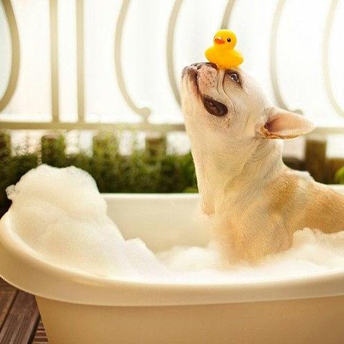 CBD Dog Shampoo
